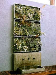 Yeye Things-eng: Air Plants