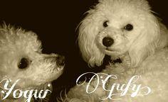 Yogui y Gufy