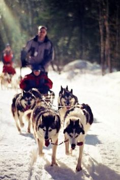 12 Activities Besides Skiing to do in Canada this Winter An eager team of Huskies dogsledding through Algonquin Park, Ontario, Canada Oh The Places You'll Go, Cool Places To Visit, Ontario Travel, Algonquin Park, Parks Canada, Cross Country Skiing, Banff National Park, Greatest Adventure, Winter Activities