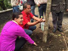 Realizan plantación de árboles en Mixcoac
