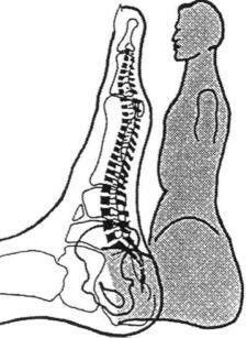 De voet met rechts daarvan een zittende houding van de mens. Het geeft een mooi beeld. Alles wat in het lichaam aanwezig is kun je via de zenuw uiteinde terug vinden op onze voeten. Een unieke manier om te behandelen en harmonie te creëren.