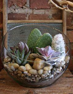Large Slanted Recycled Glass Cacti & Succulent Terrarium
