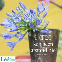 Qoutes, Me Quotes, Afrikaans Quotes, Hart, Art Projects, Relationships, Profile, Tea, Words