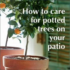 Video: How to care for potted trees on your patio.