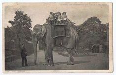 The World's Largest Elephant Jingo at the London zoo  - c 1900     Gosh what a sad story . Poor Jingo