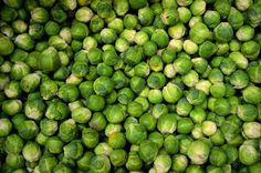 growing-brussel-sprouts by the cheap vegetable gardener