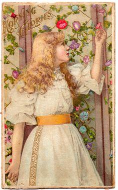 Vintage Trade Card - Morning Glories