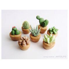 Sablé cactus                                                                                                                                                     More