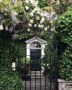 Roses and wisteria--oh my!!