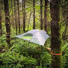Tentsile Stingray - Suspended Camping Tree House Tent added onto outdoor gear, ecosystem, forest, tree, Tree Camping, Family Camping, Camping Gear, Camping Hacks, Outdoor Camping, Outdoor Gear, Camping Storage, Couples Camping, Camping Packing