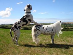 15 ponies that are so small you might mistake them for dogs - Horse & Hound Funny Horse Pictures, Dog Pictures, Horses And Dogs, Cute Horses, Pony, Animal Kingdom, Equestrian, Scenery, Barn