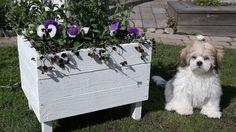 """Odlingslådor och blomlådor är både vackra och praktiska att odla i. Så här kan du bygga en egen odlingslåda, med hjälp av Karin Almström från """"Hemmafi..."""