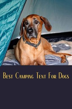 Learn how I, a camper just like you, overcame my curiosity about what is the best tents for dogs on camping trips and determing what is the best tent for your pooch. Best Tents For Camping, Cool Tents, Tent Camping, Campsite, Outdoor Camping, Coleman Tent, 6 Person Tent, Mummy Sleeping Bag, Dome Tent