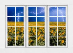 A stunning image- sunflowers and lightning as seen through a window!