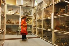Booth Museum of Natural History: Strange Animals & Skeletons