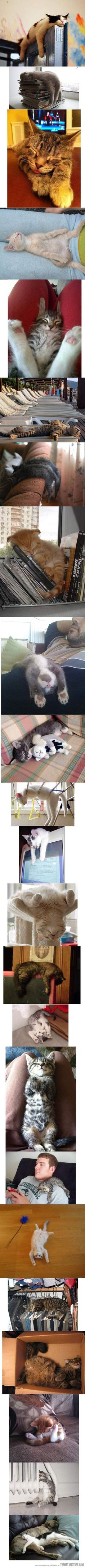 Cats sleep anywhere…anyhow...no matter how.... they are never ridiculous, they are still adorable! ;-) <3