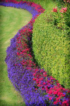 Arbuste de haie fleurie Lilac Bushes, Creative Landscape, Garden Design, Design Jardin, Purple Lilac, Boarders, Outdoor Decor, Plants, Recherche Google