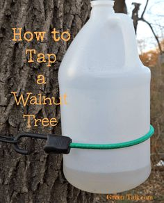 How to Tap a Walnut