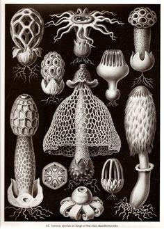 Ernst Haeckel 1974 CORALS GUNFI
