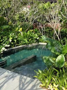 Having a pool sounds awesome especially if you are working with the best backyard pool landscaping ideas there is. How you design a proper backyard with a pool matters. Tropical Pool Landscaping, Backyard Pool Designs, Small Backyard Pools, Swimming Pool Designs, Pool Landscape Design, Natural Swimming Pools, Dream Pools, Cool Pools, Pool Ideas