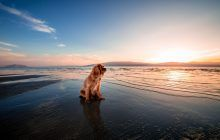 Want to take pooch on holiday this winter? Then look no further than Cornwall! We have listed our favourite dog-friendly activities which can be enjoyed at this time of year: