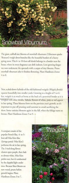 Virburnum and Weigela: Spring Flowering Shrubs | AllTogetherChanin