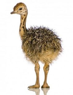 """One of the backgrounds for the song """"ostrich"""""""