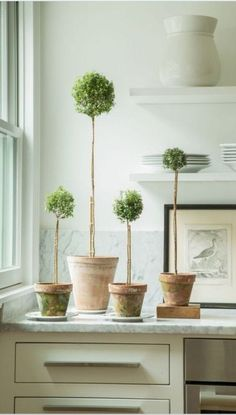Topiary greenery for your kitchen: Indoor Garden, Indoor Plants, Home And Garden, Potted Garden, Ideas Hogar, Deco Floral, Diy Décoration, Container Gardening, House Plants