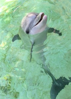 Summer at Dolphin Research Center Florida