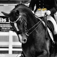 Another case of over-bending and a rein too tight. Not necessary. If dressage riders will train their horses, regularly, from the ground, such hard handling of the bit as we see here will not be necessary.