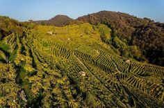 Best Wine-Themed Attractions in Europe