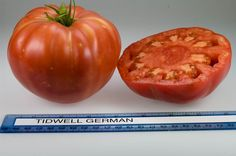 Tidwell German heirloom tomato, grown at Rutgers NJAES research farms.