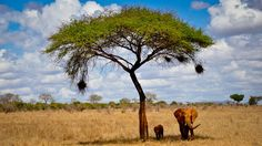 Tsavo Est National Park encounter by Alessio Anghessa on 500px