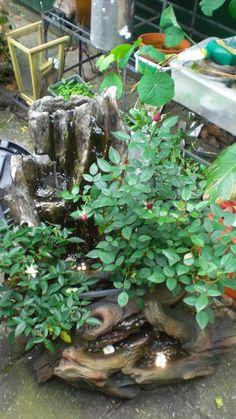 Van 2 waterornamenten, en potrozen, van de Intratuin een waterpartij gemaakt. Staat nu nog buiten, maar moet nog naar binnen ivm vorst