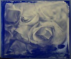 Blue Roses - Mark Sink, 2010