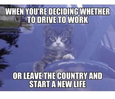 24 Memes To Enjoy Before Your Shift Is Over. | Someecards Memes Funny Cat Memes, Funny Cats, Funny Animals, Funny Humor, Silly Cats, Work Memes, Work Humor, Humor Humour, Ecards Humor