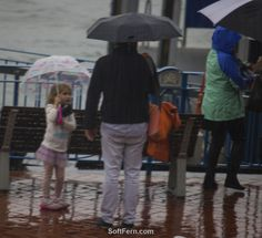 Auckland – rain photos. Part I. ... 20  PHOTOS        ... So what's winter Auckland's climate like?        Originally posted:         http://softfern.com/NewsDtls.aspx?id=1132&catgry=7            SoftFern News, SoftFern Sport News, SoftFern Auckland News, New Zealand News, Auckland, The America's Cup, America's Cup parade, America's Cup celebration, photos of America's Cup parade in Auckland, photos of Auld Mug, Team NZ America's Cup parade, Auckland – rain photos, rain photos, winter…