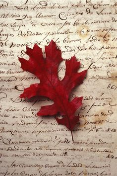 the red leaf.