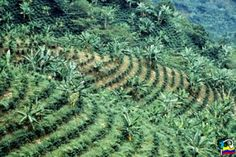coffee farms in columbia | colombia s coffee farmers of whom there are over 500000