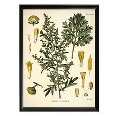 Make a statement with our signature line of vintage botanical illustrations circa 1883. The perfect addition to any interior space, these designs pack a purposeful and visually considered punch. • Mus