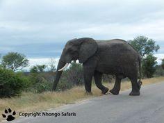 Elephant Kruger National Park, National Parks, View Photos, Safari, Elephant, Pictures, Animals, Photos, Animales