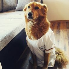 My beautiful dog polina with her german soccer trikot Mein hübscher Hund Polina mit ihrem Deutschland Trikot zur Fußball WM 2014