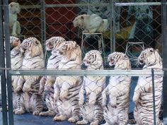 Outside the Store Bought Box: Day 4 in Guangzhou: Safari Park