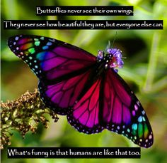 Butterflies never see their own wings. They never see how beutiful they are, but everyone else can. Whats funny is that humans are like that too.