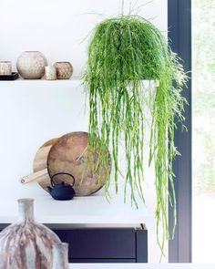 53 Comfortable Home Patio Design Ideas With Best Hanging Plants - Many of us enjoy having green surroundings, but it may not always be practical to have live plants in our environment. This is especially true wheneve. Patio Plants, Small Plants, Indoor Plants, Artificial Hanging Baskets, Mid Century Rustic, Living Room Plants, Vertical Garden Wall, Air Plant Display, Hanging Planters