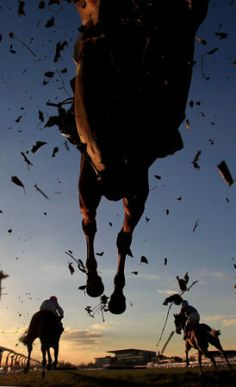 Jumping the last at Doncaster. You are in the right place about Racing Tattoos for girls Here we off Most Beautiful Animals, Beautiful Horses, Beautiful Sunset, Beautiful Pictures, Thoroughbred Horse, Dressage, Racing Tattoos, Tattoos Skull, Sport Of Kings
