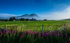 Norte de Noruega, Montañas, casa, campo, Flores