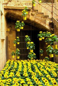 Lluvia de flores (Girona  temps de flors), Spain