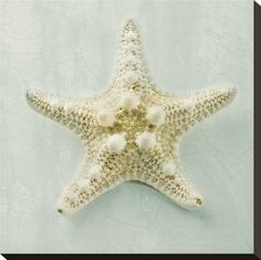 Ocean Jewel III Stretched Canvas Print by Suzanne Goodwin at Art.com