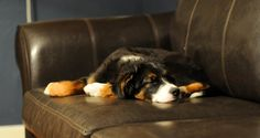 Dealing with a bad case of doggie diarrhea?... I used to work at a vet. While there, I learned a few 'home remedies' for some common pet ailments, including diarrhea. Here are the most common home remedies for treating a mild case of diarrhea in your dog.